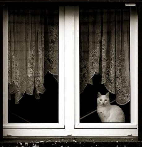 cat-window-13
